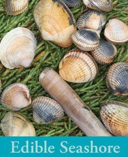 book cover of River Cottage Handbook No 5 - Edible Seashore