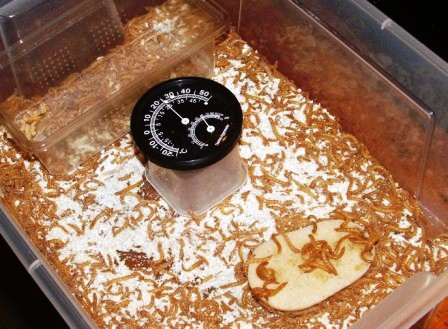 Mealworms, Temp & Humidity