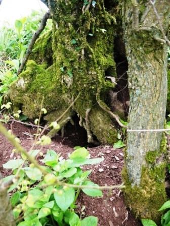Rabbit Hole Tree
