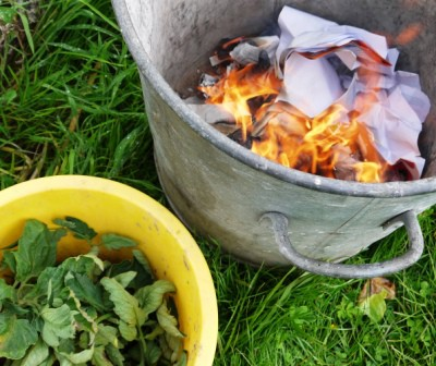 Burning Infected Leaves to Control Tomato Blight