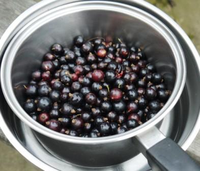 Fresh Blackcurrants