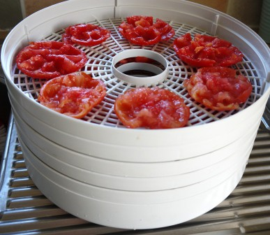 white, round dehydrator stacked with large red tomatoes for drying