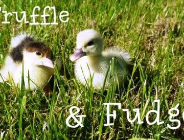 Truffle & fudge