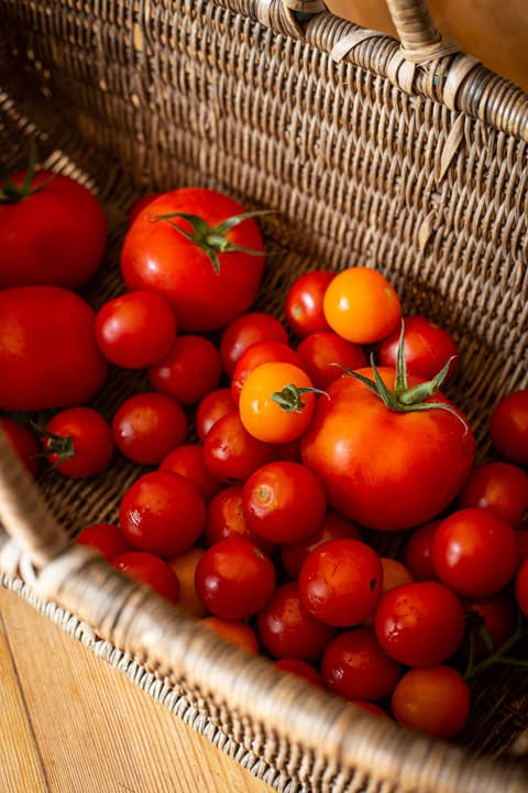 wicker basket of mixed fresh tomatoes