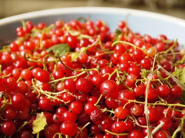 Bowl of redcurrants