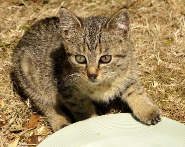 kittens2glw