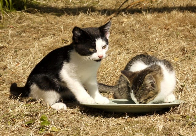 kittens3glw