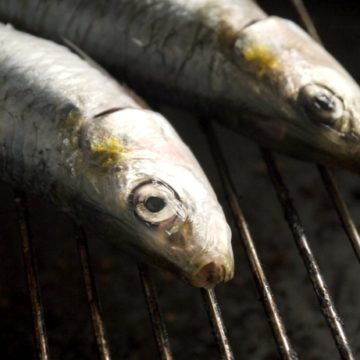 fresh fish sardines seafood