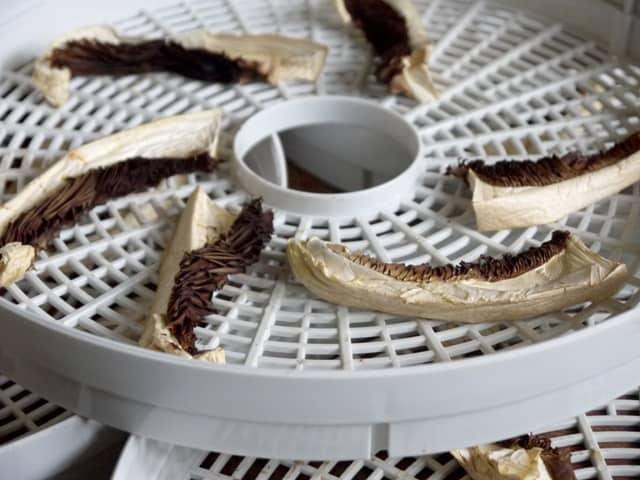 Mushroom dried in a dehydrator