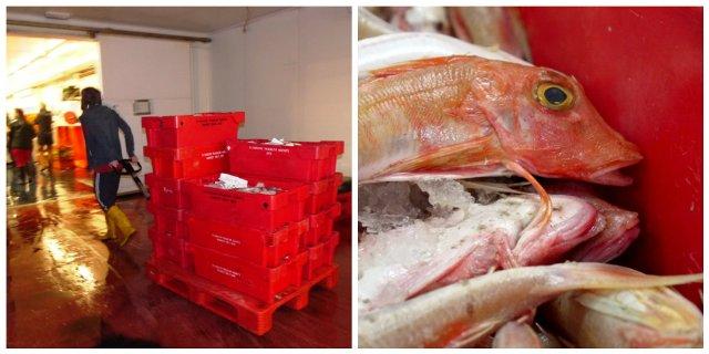 Plymouth Fish Market