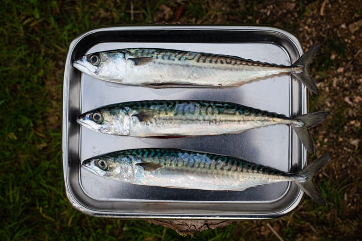 silver tray with 3 whole mackerel on