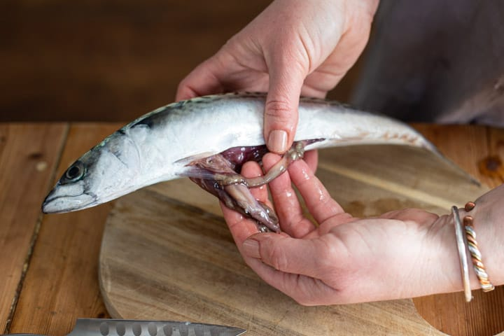 womans hands holding a mackerel and removing its intestines