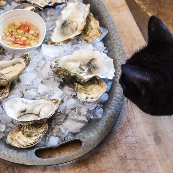 Oysters and a cheeky cat :)