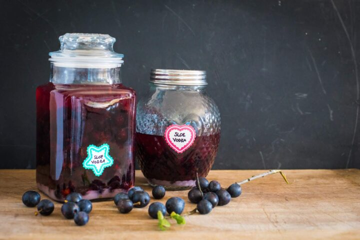 Homemade sloe vodka in glass bottles on a wooden table with sloes