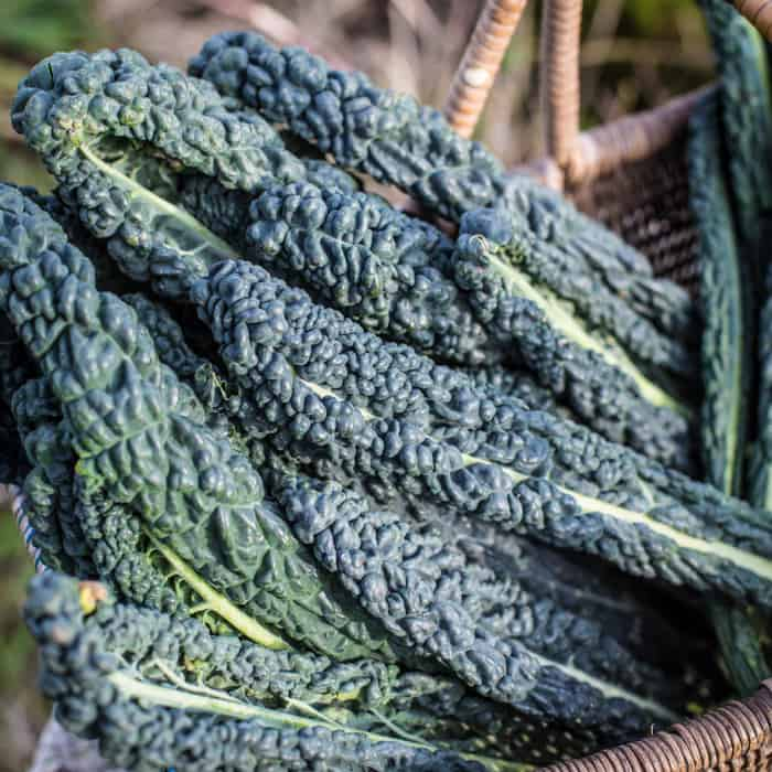 wicker basket of cavolo nero kale leaves