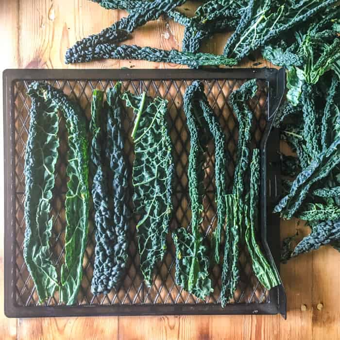wooden counter with black dehydrator rack on filled with fresh kale leaves ready to dry