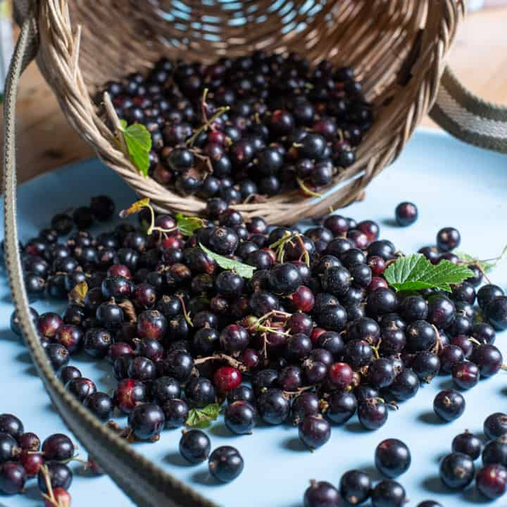 blue cloth with baskets of fresh blackcurrants spilling out on to it