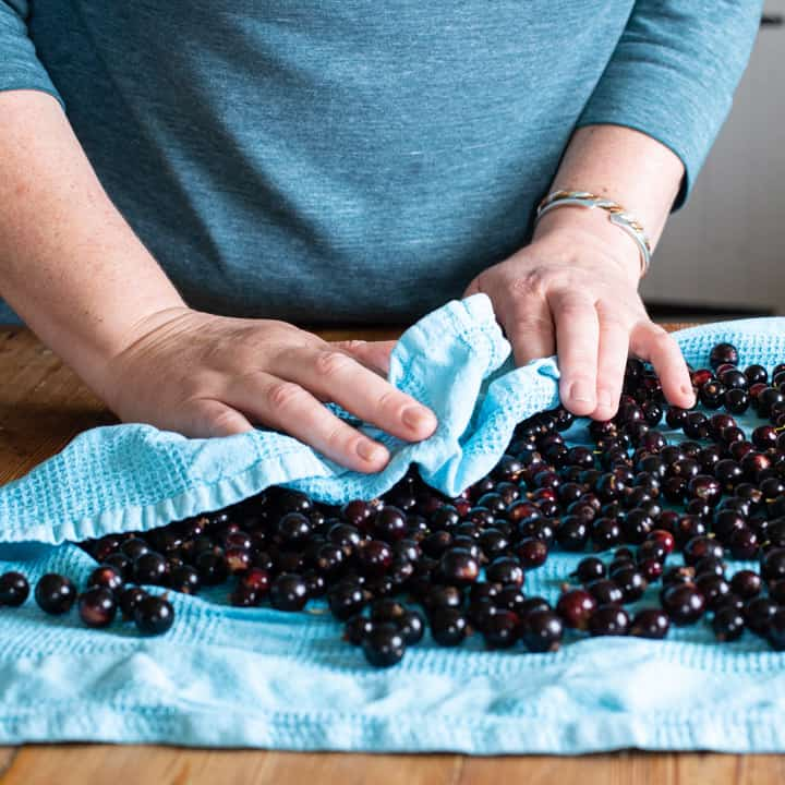 womans hands drying blackcurrants on with a blue tea towel