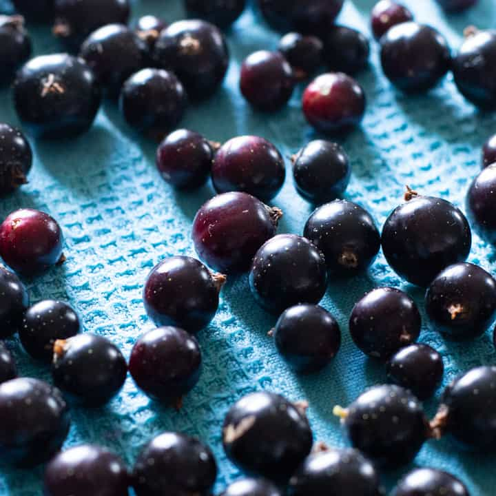 close up of freshly picked blackcurrants drying on a blue cloth
