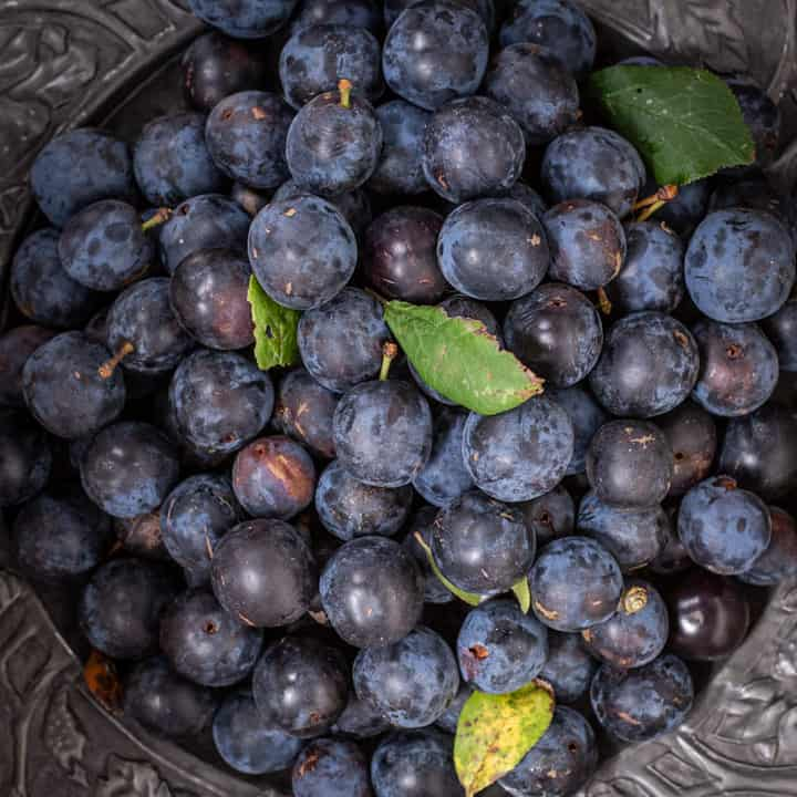 pewter plate with a pile of wild damsons and a few damson leaves