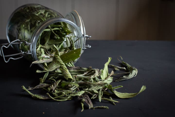 black background with a glass jar of dried ribwort plantain leaves