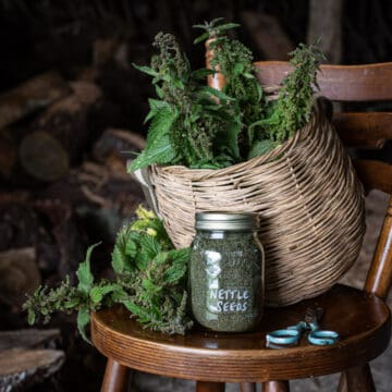 wooden chair with wicker foraging basket filled with stinging nettles and glas jar filled with dried nettle seeds