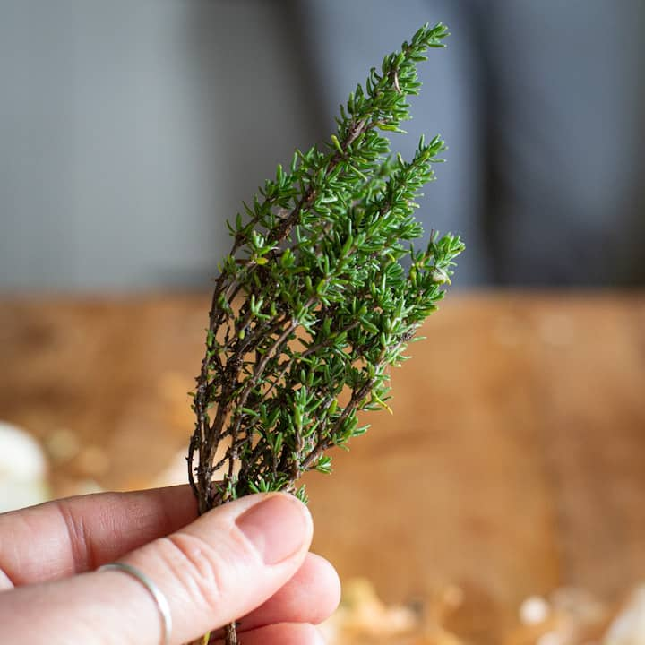 Woman hand holding a small spring of fresh thyme